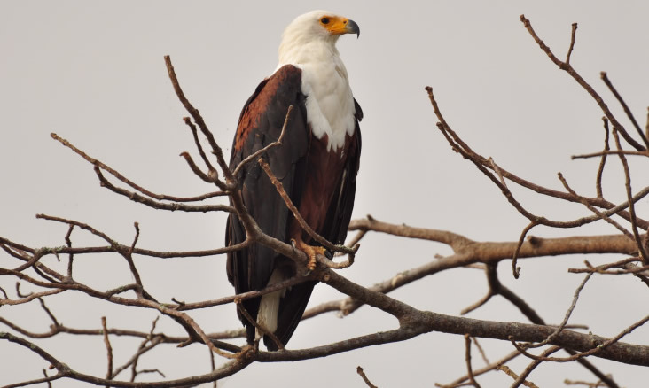 birding-lake-mburo