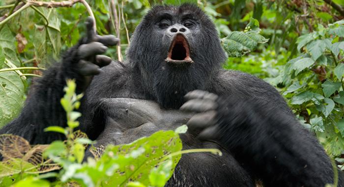 rwanda-gorillas-tour