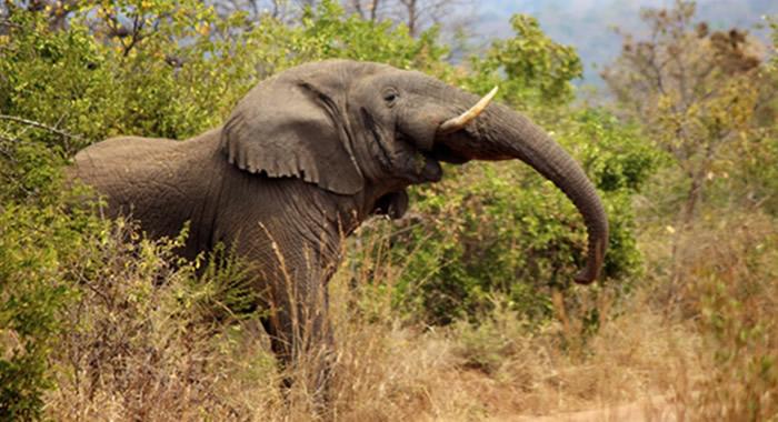 wildlife-Safari-rwanda