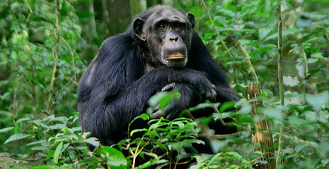 kibale forest uganda