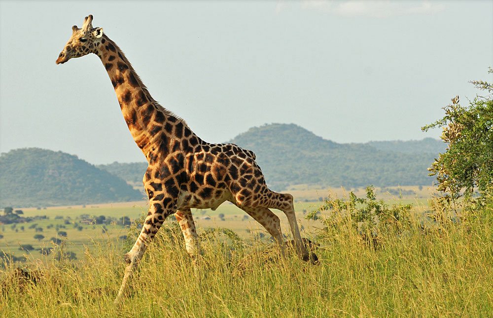 Kidepo_Valley_National_Park